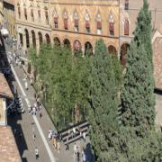 Pollution 2018 - RefleAction; il bosco urbano di piazza Santo Stefano a Bologna